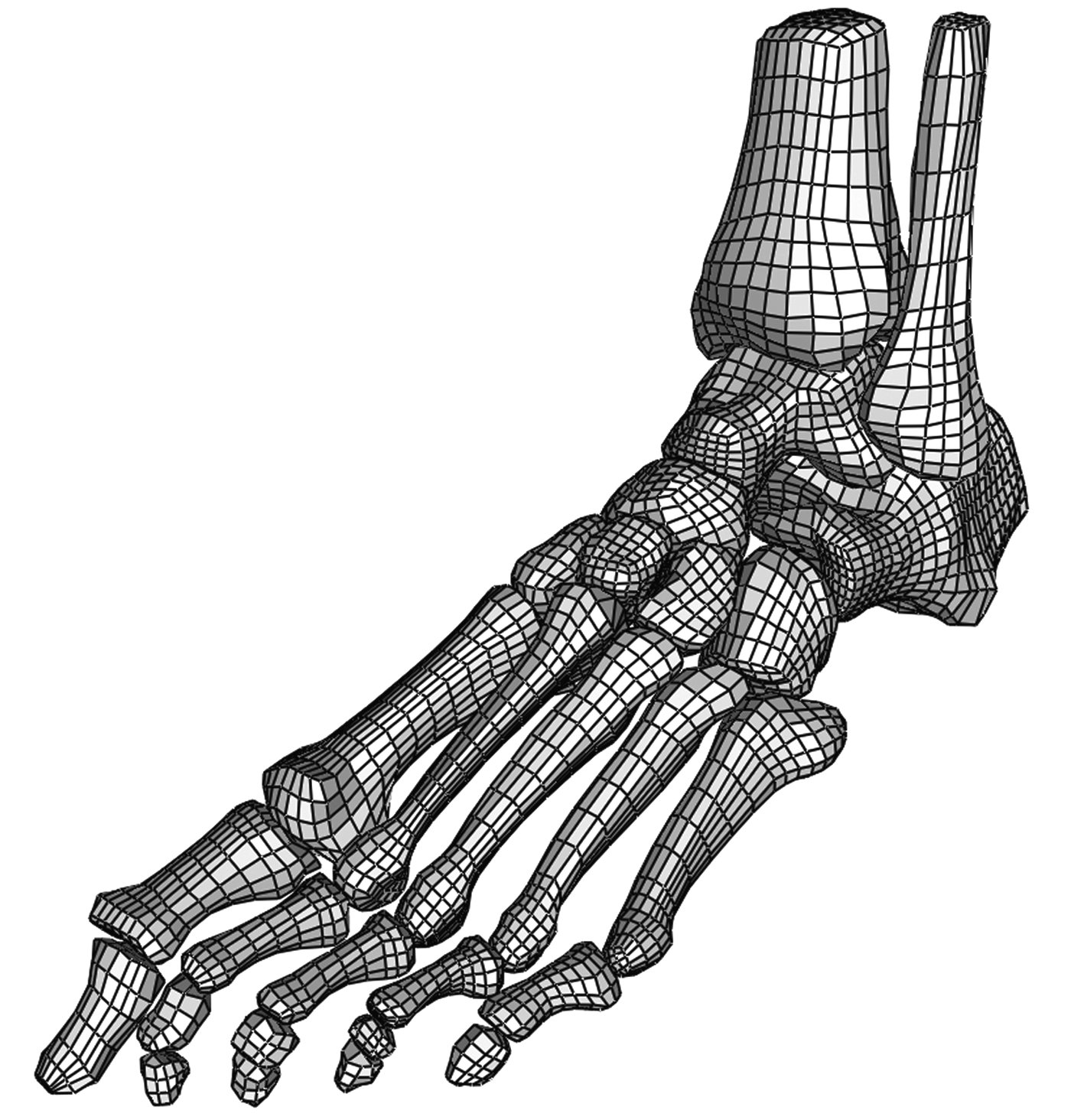 A three-dimensional, anatomically detailed foot model: A foundation ...